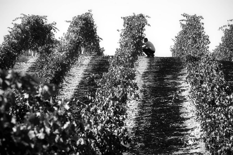 Hoyada viñedo