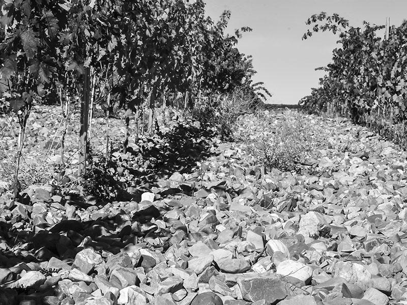 viñas centenarias